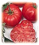 Tomatoes, Beefsteak Tomato 50 Seeds - Impressive! ,ORGANIC, NON-GMO, USA PRODUCT. PACKED BY JACOBS LADDER ENT.