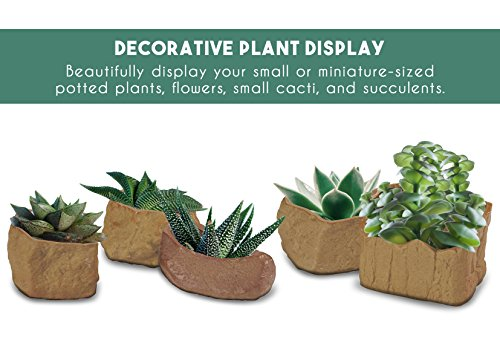 Cactus Planter and Succulent Plant Pot Set – 5-Pack of Small Ceramic Flower  Pots for Indoor, Outdoor Display, 5 Assorted Shapes and Designs, Brown