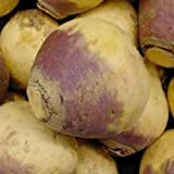 Rutabaga- American Purple- 50 Seeds