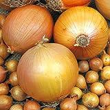 Big Daddy Onion 200 Seeds #0623 Item Upc#650348692094