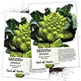 Seed Needs, Romanesco Broccoli (Brassica oleracea) Twin Pack of 350 Seeds Each Non-GMO