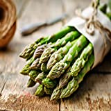 Mary Washington 10 Live asparagus bare root plants -2yr-crowns