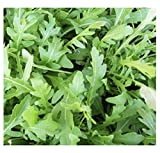 ORGANIC HERB ROCKET WILD 3000 SEEDS