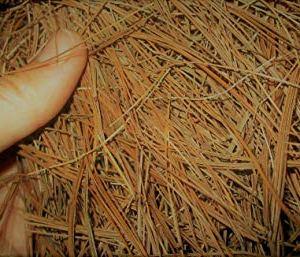 Heritage Farms Premium Pine Needles, 100% Pine Straw Mulch (8 Quart)