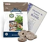 Basil Seed Collection, 5 Variety, 100% Non-GMO Heirloom Genovese Basil, Thai Basil, Lemon Basil, Italian Basil and Dark Opal Basil Herb Seeds (w/Pellets)