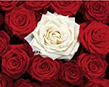 Bed of Roses (Red & White) Art Poster Print Mini Poster Mini Poster Print, 20x16