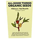 Hibiscus sabdariffa/Roselle Seeds (~25) by All Good Things Organic Seeds: Certified Organic, Non-GMO, Heirloom, Open Pollinated Seeds from the United States