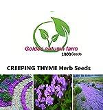 golden autumn farm 1,000 CREEPING THYME Herb Seeds Thymus Serpyllum ~Butterflies love it