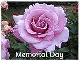10 Memorial Day Hybrid Tea Rose Seeds