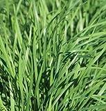 David's Garden Seeds Herb Chives Garlic Nira SL2071 (Green) 200 Non-GMO, Organic Seeds