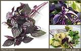 Nature Seeds Dark Opal Basil Purple Basilicum Herb 200 Gardening Seeds