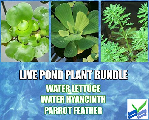 3-Water-Lettuce-3-Water-Hyancinth-Bundle-Parrot-Feather-Floating-Live-Pond-Plants