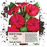 Seed Needs, Red Four O' Clock (Mirabilis Jalapa) 60 Seeds