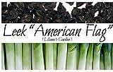 Leek Seeds - American Flag - Heirloom - Liliana's Garden