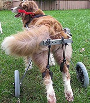 Adjustable Dog Wheelchair (M), Hip Height 16'-20', Weight 40 to 60 lbs,hind Legs Rehabilitation