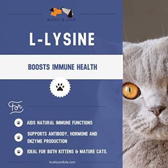 Buddy-Lola-L-Lysine-for-Cats--Immune-Support-for-Cats--Made-in-The-USA--Natural-Ingredients--Tasty-and-Healthy--Cat-Decongestant-Allergies-Infection-and-Cold-Relief