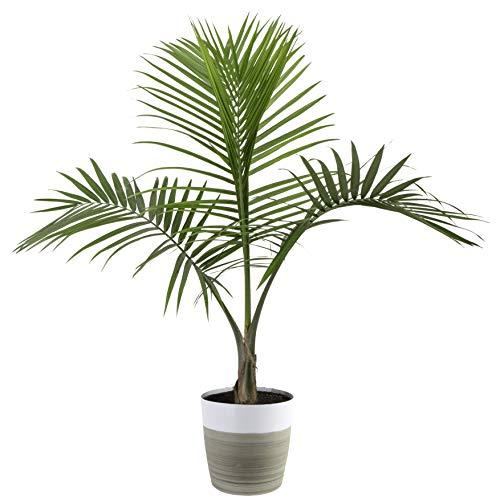 palm tree - modern boho