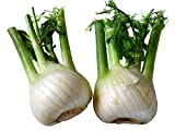 Sale!Free shipping Fennel bulbs 100 seeds outdoor potted vegetable seeds plants bonsai plant DIY home garden