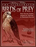 Illustrated Birds of Prey: Red-Tailed Hawk, American Kestral, & Peregrine Falcon: The Ultimate Reference Guide for Bird Lovers, Woodcarvers, and Artists (Fox Chapel Publishing)