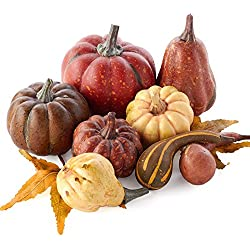 Factory Direct Craft Package of 8 Artificial Fall Pumpkins and Gourds