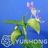 AGROBITS Big Sale 100pcs Commelina Communis Bonsai Home Flower Rare Potted Terrestria Bonsai Plants and Flowers Sementes for Garden