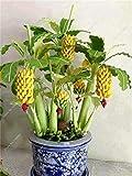 30 Pcs Dwarf Banana Seeds Bonsai Tree,Tropical Fruit Seeds,Bonsai Balcony Flower for Home Planting,Germination Rate of 95%