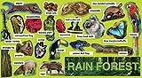 Rainforest Plants & Animals Mini Bulletin Board