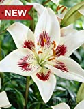 White Pixels Asiatic Lily