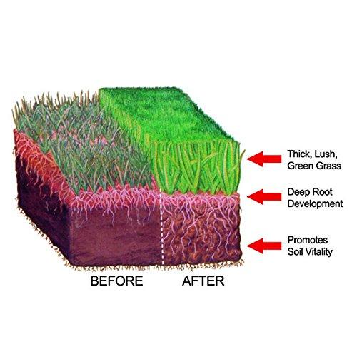 Safer-Brand-Ringer-Lawn-Restore-2-Pack