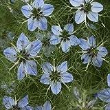 Outsidepride Nigella Sativa Black Cumin Herb Plant Seed - 1000 Seeds