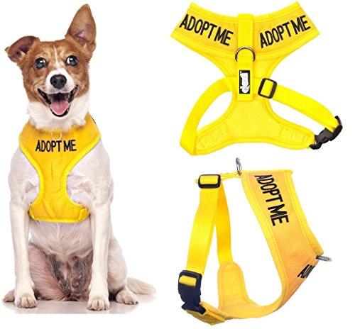 Dexil Limited Adopt ME (I Need A New Home) Yellow Color Coded Non-Pull Front and Back D Ring Padded and Waterproof Vest Dog Harness Prevents Accidents by Warning Others of Your Dog in Advance 1