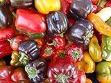 Sweet Pepper Seeds Assortment- 6 Varieties- Over 300 Seeds- All Non-GMO, Heirloom Varieties
