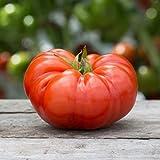 David's Garden Seeds Tomato Beefsteak (Red) 50 Non-GMO, Heirloom Seeds