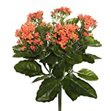 Vickerman FL170102 Orange Kalanchoe Floral Bush