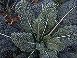 Organic Lacinato Kale (Brassica Oleracea L.) Vegetable Heirloom Seeds