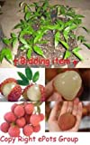 One Lychee Edible Fruit Tree Exotic Tropical Live Plant