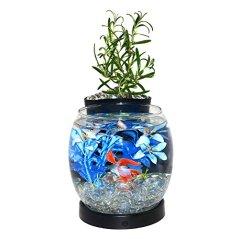 Elive-Betta-Fish-Bowl-Betta-Fish-Tank-with-Planter-Small-075-Gallon-Aquarium-LED-Light-Timer-Black