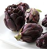 "Purple Artichoke Plant - Delicious Perennial Vegetable - Easy to Grow - 4"" Pot"