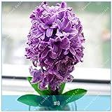 ZLKING 10 Kind of Hyacinth Bulb Bonsai Hyacinthus Orientalis Bonsai Hydroponics Flower Not Seed High Germination Rate Rapid Grow 8