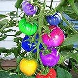100 pcs Rare Blue Tomato Seeds Multi-color Tomato Seeds Cherry Tomatoes Tomato Seeds in Bonsai Organic Fruits And Vegetables Multi-Colored