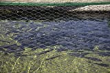 Photograph| Pond for adolescent fish, covered by chicken wire to deter poachers, at the state-run Twin Mountain Hatchery near Carroll, New Hampshire 2 Fine Art Photo Reproduction 24in x 16in