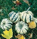 David's Garden Seeds Squash Winter Sweet Dumpling DW6811 (Multi) 50 Non-GMO, Open Pollinated Seeds