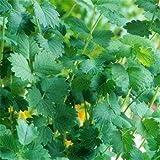 Outsidepride Salad Burnet - 1000 Seeds