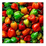 David's Garden Seeds Pepper Hot Habanero Rainbow Mix SL1663 (Multi) 50 Non-GMO, Heirloom Seeds