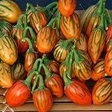 New Home Garden Plant 10 Seeds Solanum Aethiopicum African Eggplant Vegetable Seeds