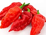 "Ghost Pepper Seeds- 25+""Bhut Jolokia"" by Ohio Heirloom Seeds"