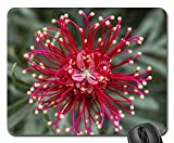 Mouse Pads - Grevillea Flower Australian Native Pink Red White