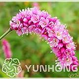 AGROBITS New Bonsai! 100PCS Rare Polygonum Orientale Flower Bonsai, Bonsai Organic Vegetable & Fruit Bonsai, Potted Plant for Home & Garden