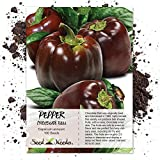Package of 100 Seeds, Chocolate Bell Pepper (Capsicum annuum) Non-GMO Seeds by Seed Needs