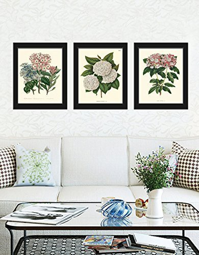 Vintage, Cute and Popular Botanical Wall Art Sets - Floral Wall Decor